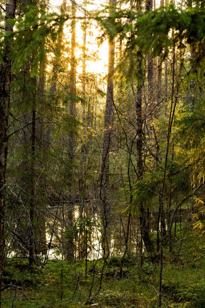 Сказочный финский лес